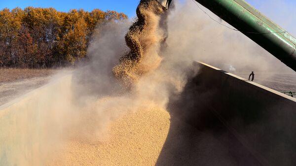 Комбайн выгружает бобы во время уборки сои в Хабаровском крае