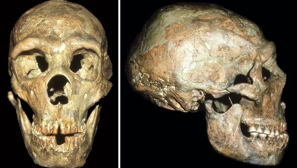 Череп глухого неандертальца, найденный в пещере Шанидар на севере Ирака