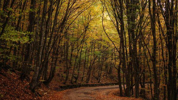 Осенний лес на горе Ай-Петри в Крыму. Архивное фото