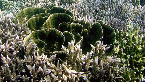 Кораллы, водоросли