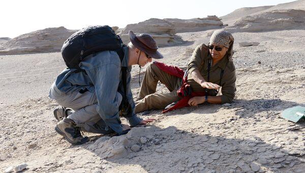 Ученые проводят раскопки на «кладбище» птерозавров на северо-востоке Китая