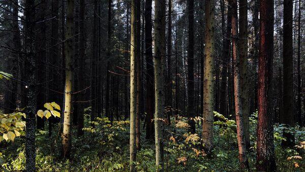 Активисты ОНФ предотвратили застройку лесных территорий в Томской области