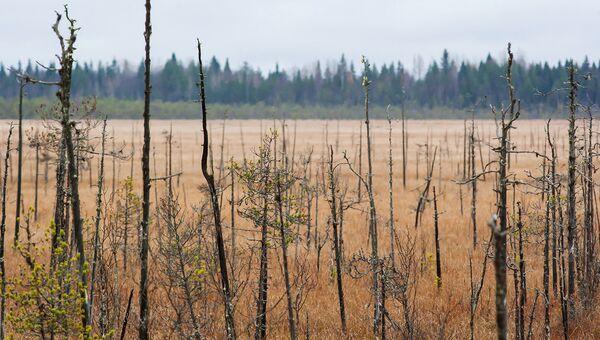 Минприроды РФ расширит список водно-болотных угодий международного значения