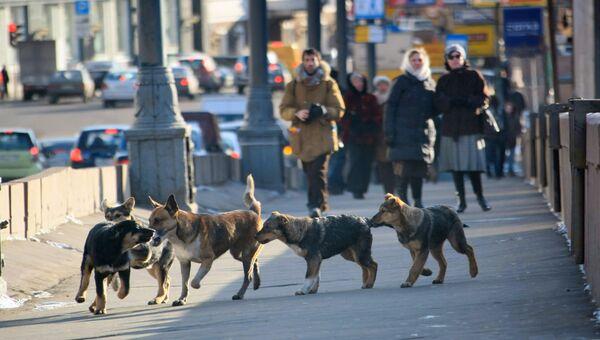 Бездомные собаки на улицах Москвы. Архивное фото.