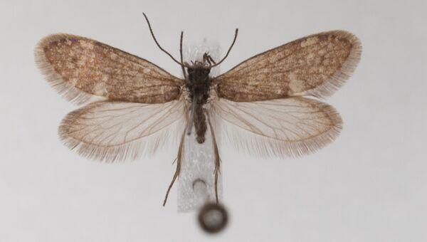 Так могли выглядеть первые бабочки Земли, жившие в Германии около 200 миллионов лет назад
