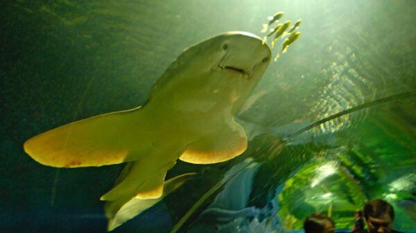Океанариум, где в августе произошла гибель 4 тыс рыб, открылся в Сочи