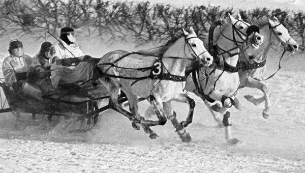 Тройка лошадей участвует в забеге на Московском ипподроме