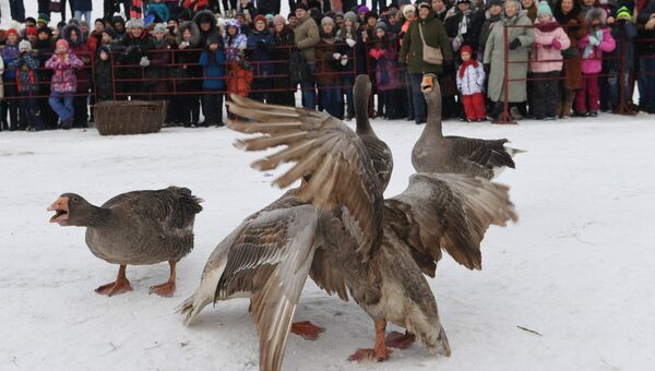 Участники праздничных гуляний в Суздале, посвященных проводам Широкой Масленицы, наблюдают за гусиными боями. 17 февраля 2018