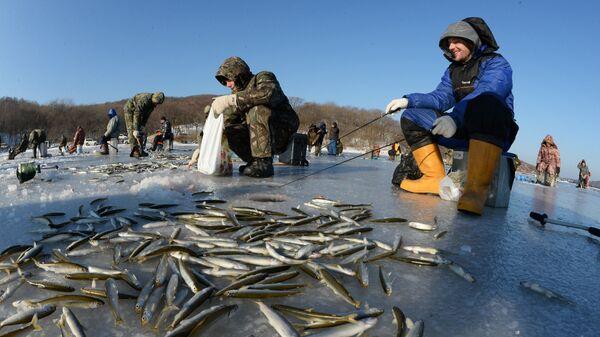 Рыбаки-любители во время подледного лова корюшки в бухте Новик острова Русский во Владивостоке