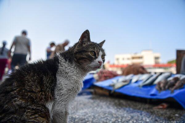 Кот у прилавка со свежей рыбой в порту города Фоча, Турция