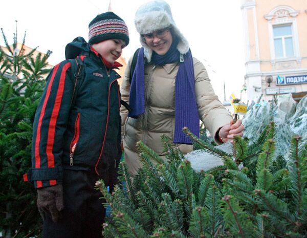 Живые ели в Москве подорожали на 10-15% в 2009 году