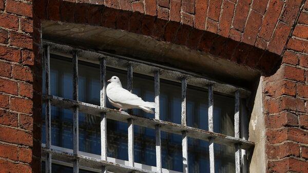 Голубь на окне камеры Бутырской тюрьмы