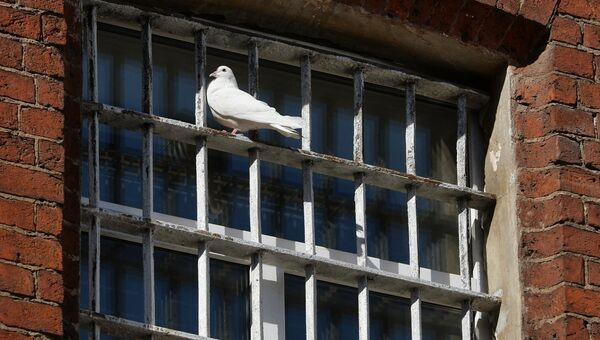 Голубь на окне тюрьмы. Архивное фото