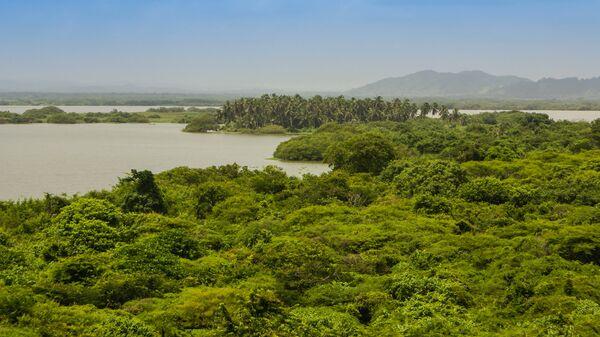 Амазонские тропические леса