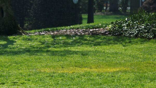 Желтая трава на месте, где должен находиться дуб, который посадили Дональд Трамп и Эммануэль Макрон. 28 апреля 2018