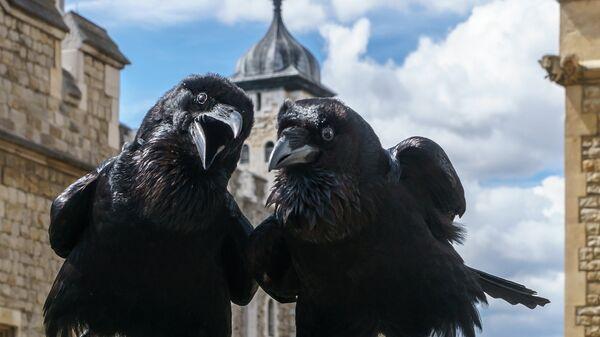 Вороны Тауэра, Великобритания