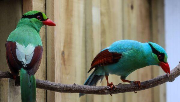 Редкие птицы, похожие на черепашек-ниндзя, в зоопарке Ньюквей, Великобритания