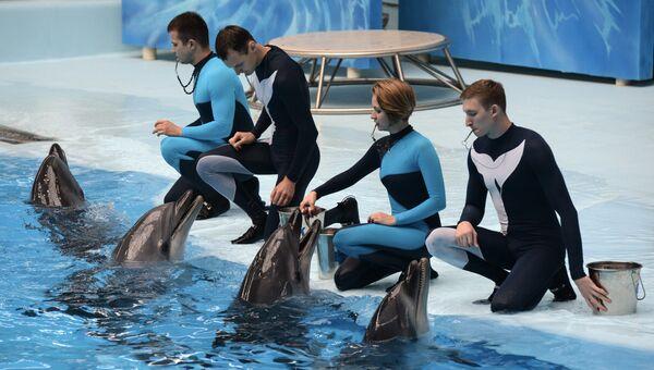 Дельфины афалин во время выступления. Архивное фото