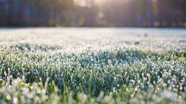 Иней на траве. Архивное фото