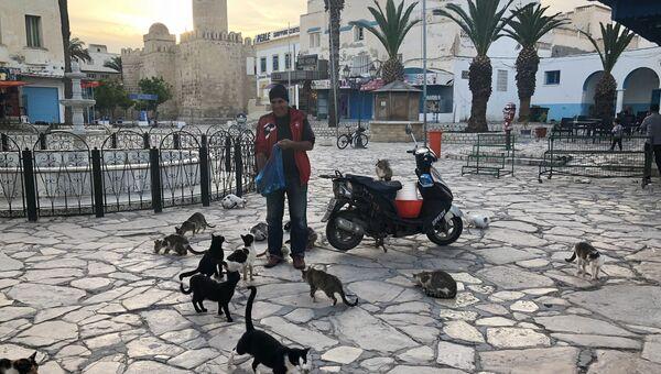 Местный житель кормит кошек на базарной площади. Сус, Тунис