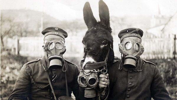 Немецкие солдаты с мулом в противогазах во время Первой Мировой войны