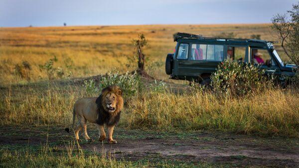 Лев возле автомобиля с туристами