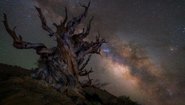 Работа фотографа Jez Hughes Guarding the galaxy, вошедшая в шорт-лист Insight Astronomy Photographer of the Year 2018