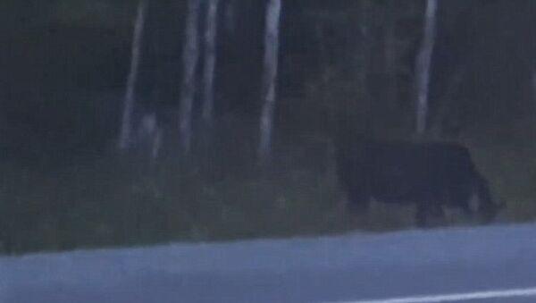 Кадр из видео, на котором запечатлено неизвестное существо
