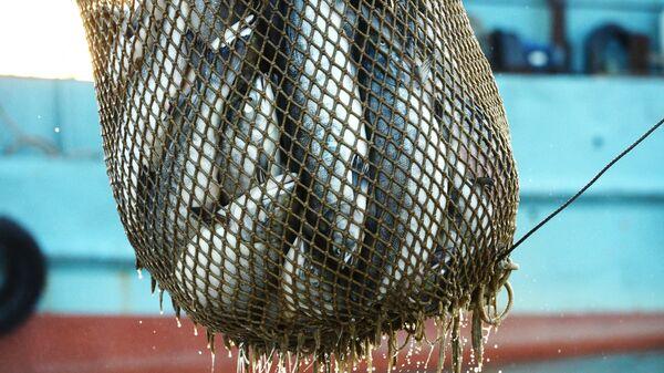 Лов лососевых. Архивное фото