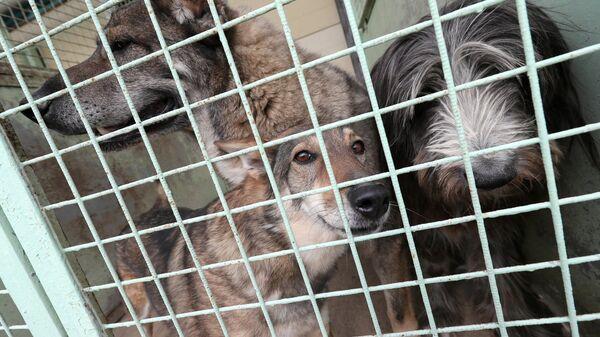 Собаки в приюте для бездомных собак