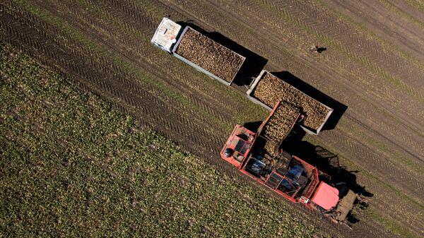Уборка урожая сахарной свеклы в Краснодарском крае. Архивное фото
