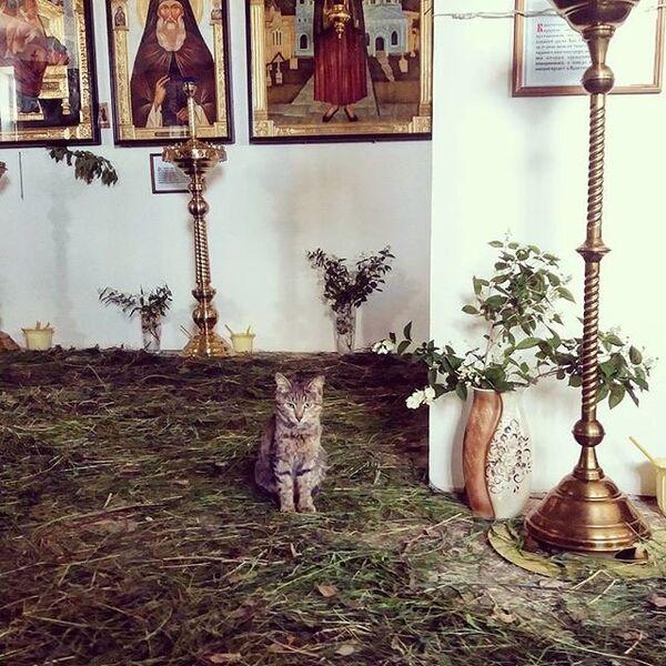 Кот в храме Казанской иконы Богородицы в Орске