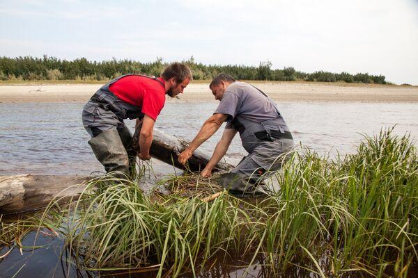 Почти вся древесина на Ямале находится в речных отложениях