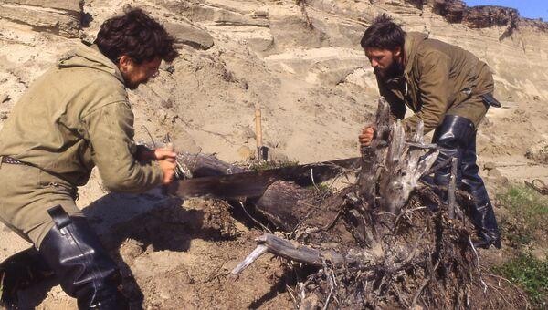Добывают образец дерева