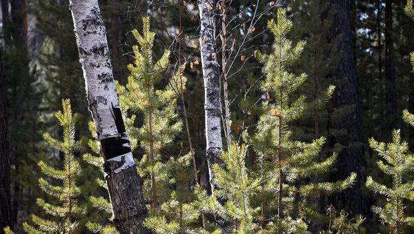 ОНФ предлагает повысить эффективность выявления экологических нарушений