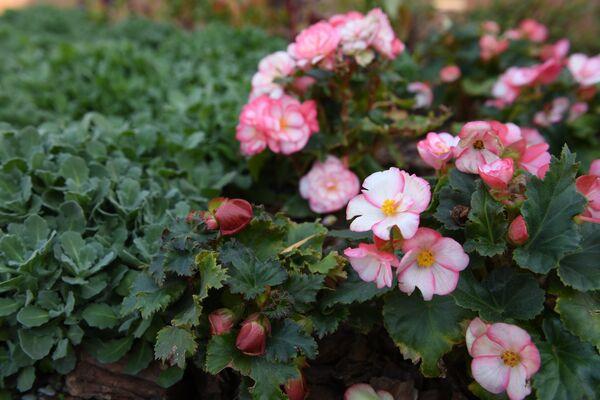 Цветы в тактильном парке