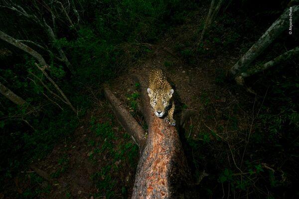 Работа фотографа Alejandro Prieto. Победители конкурса Wildlife Photographer of the Year 2018