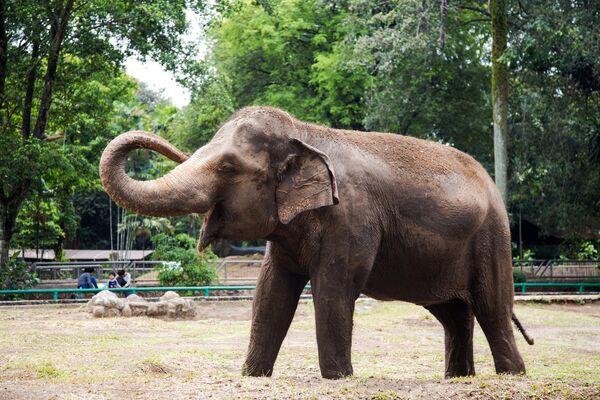 Слоненок в зоопарке Рагунан в Джакарте