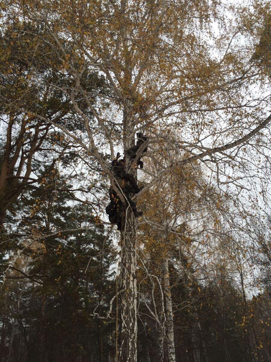 Курс выживания. Уральские леса. Ночевка на дереве. Октябрь 2016