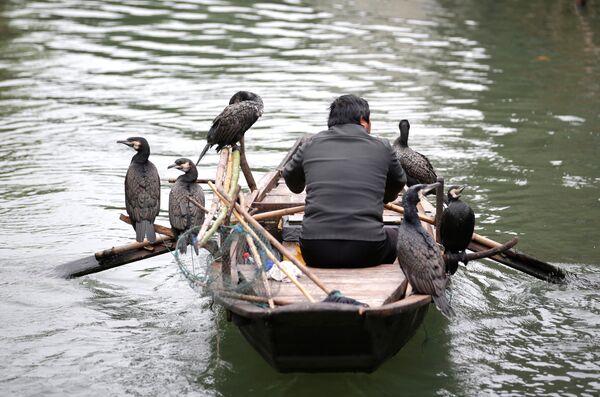 Рыбак плывет в лодке с птицами по реке Учжэнь, Китай