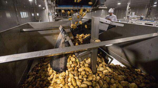 Картофель на технологической линии на заводе по переработке и производству замороженного картофеля