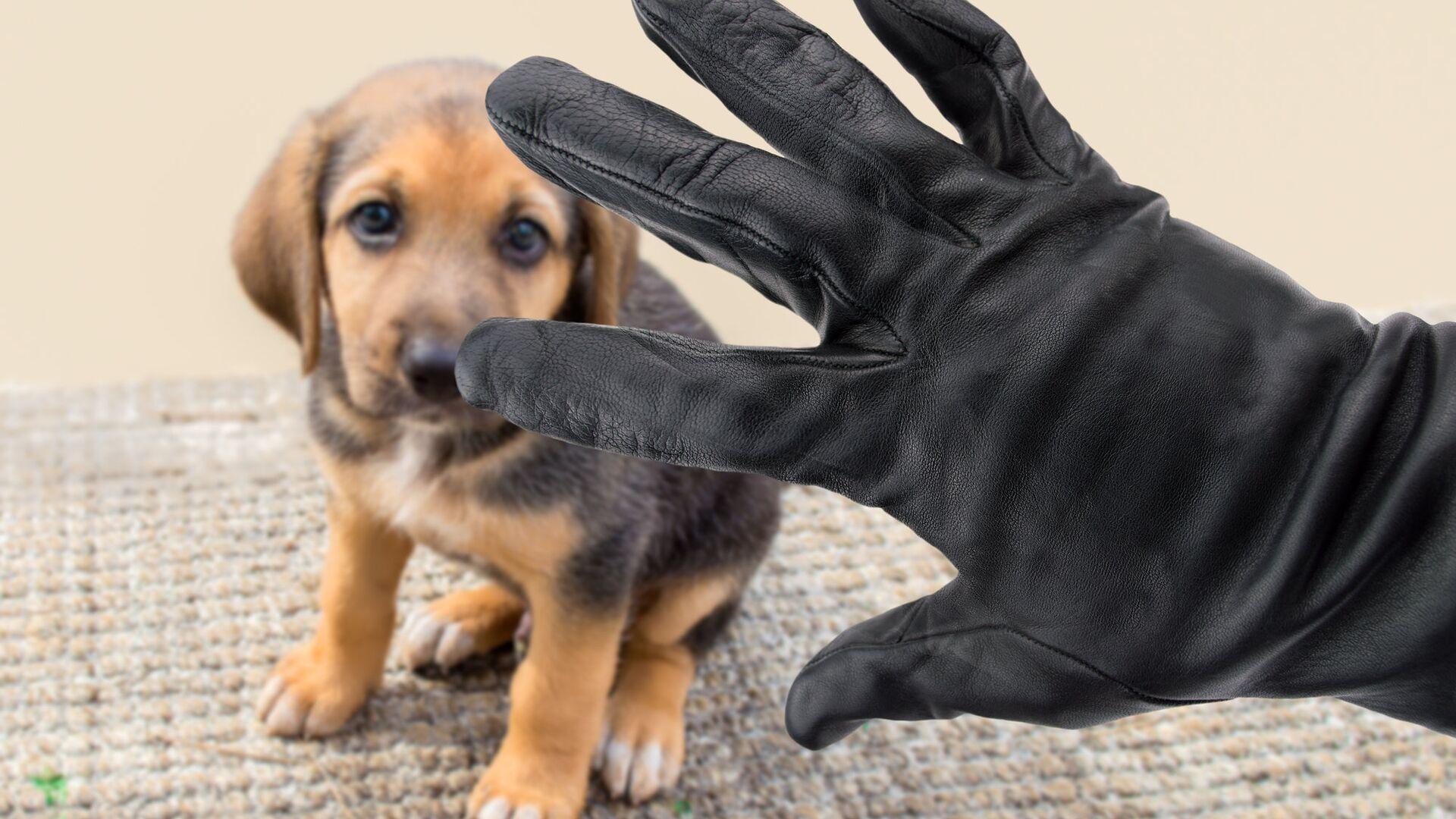 Мужская рука в перчатке возле собаки - РИА Новости, 1920, 23.10.2020