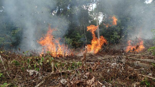 Пожары в колумбийских лесах оказались связаны с исчезновением боевиков ФАРК