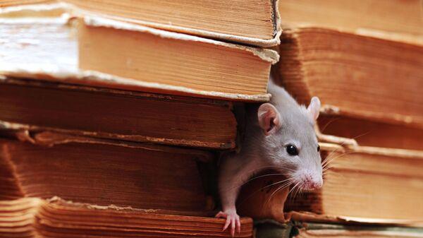 Мышь в библиотеке
