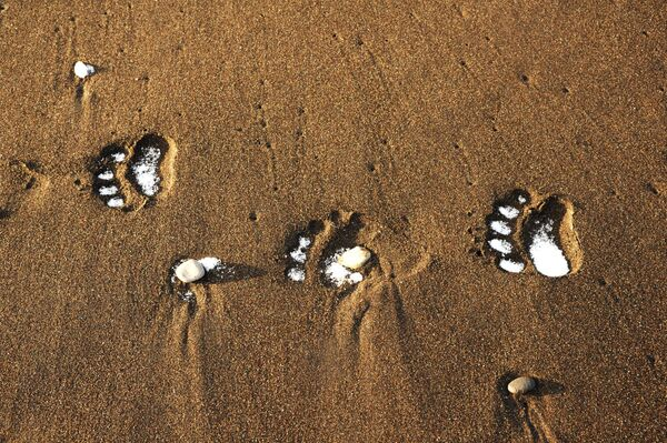 Следы бурого медведя-шатуна на побережье Тихого океана