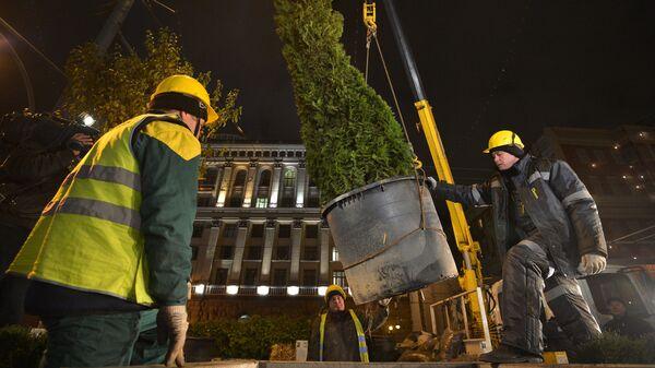 Высадка деревьев зимних пород на Тверской улице