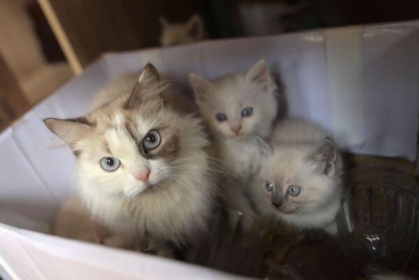 Мама с котятами. Село Кабардинка, корчма «Казачий курень»