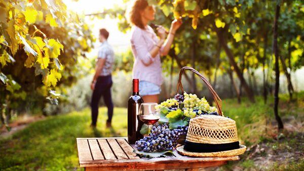 Пикник на винограднике