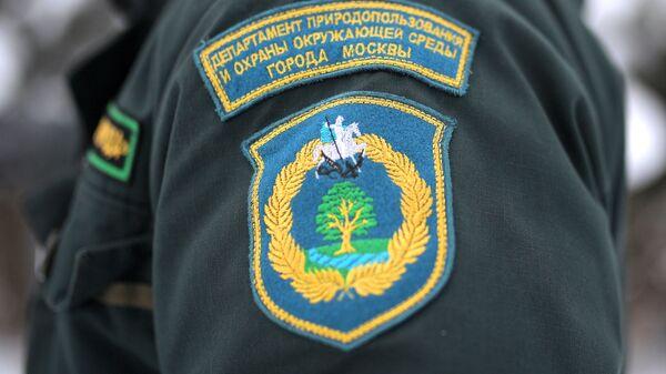 Рейд по незаконной вырубке елок в парке Кузьминки