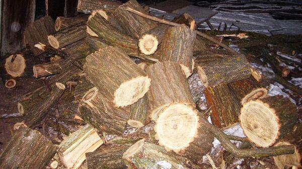 Незаконная рубка леса в Ставропольском крае